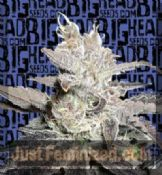 Freeze Berry Automatic Female Cannabis Seeds by Big Head